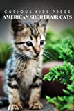 American Shorthair Cat - Curious Kids Press: Kids book about animals and wildlife, Children's books 4-6
