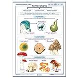 Reino vegetal / Reino Hongos: Láminas de los Seres Vivos (Láminas de Ciencias)