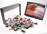 Photo Jigsaw Puzzle of Pink flamingo in ...
