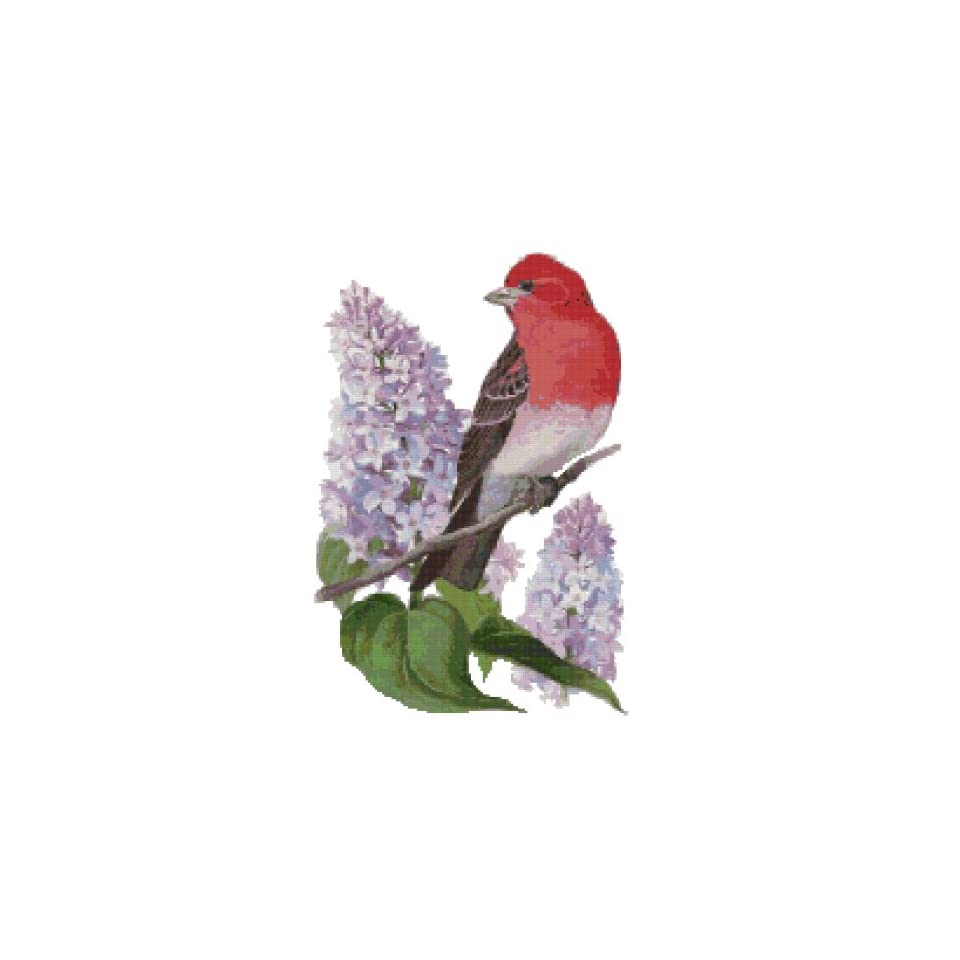 New Hampshire State Bird and Flower Counted Cross Stitch Pattern