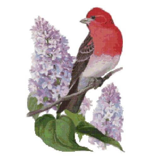 New Hampshire State Bird and Flower Purple Finch and Purple Lilac