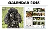 POODLE DOGS CALENDARIO CALENDAR 2016