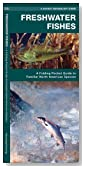 Freshwater Fishes: A Folding Pocket Guide to Familiar North American Species (Pocket Naturalist Guide Series)
