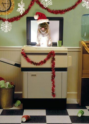 Avanti Christmas Cards, Holiday Party Pug , 10
