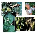 Nature's Medicine Chest 4x6 Plant ID Card Series(LeArta A. Moulton/LeArta Moulton)