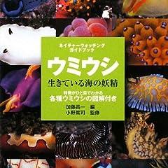 ウミウシ―生きている海の妖精 (ネイチャーウォッチングガイドブック)