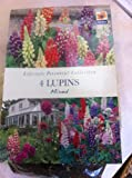 De Ree 4 Lupins mixed Summer Bulbs -Lifestyle Perennial Collection