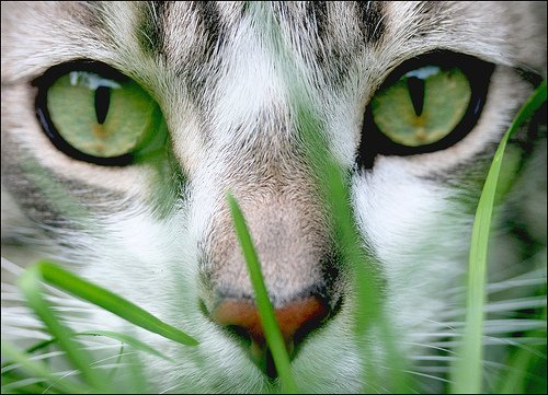 Seeds And Things Cat Grass Sweet Oats 1,000 Seeds This Is A Good Digestive Aid In Small Doses For Most Cats