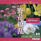 MIXA IMAGE LIBRARY Vol.85 野花繚乱