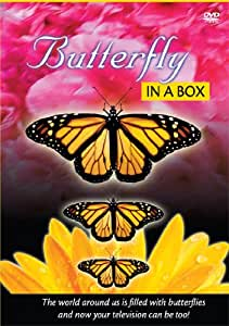 Butterfly in a Box