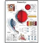 3B Scientific Human Eye Chart Paper V...