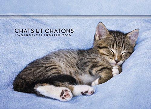 L'agenda-Calendrier Chats et chatons 2016