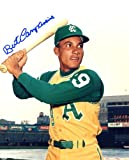 Bert Campaneris Autographed/ Original Signed 8x10 Color Photo Showing Him with the Kansas City Athletics