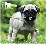 Pug Puppies 2015 Square 12x12