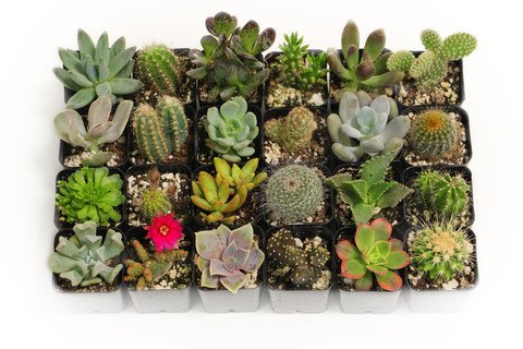 9 Assorted Cactus & Succulents