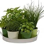 Plantes aromatiques en m�lange 100 gr...