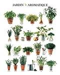 1art1 44870 Pflanzen - Aromatischer G...