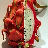 Dragon Fruit Plant - Hylocereus - Pitaya/Strawberry Pear