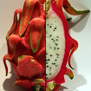 "Dragon Fruit Plant - Hylocereus - Pitaya/Strawberry Pear - 3"" Pot"