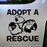 ADOPT A RESCUE PARROT Macaw Amazon Conure Bird Love Parrots Vinyl Decal Sticker Car Window Door Wall Sign BLACK
