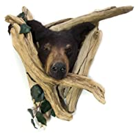 Black Bear Head Mount