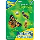 Étapes du Cycle de vie-papillon