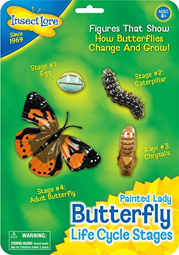 Butterfly Life Cycle Stages - 1
