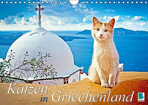 katzen-in-griechenland-wandkalender-2017-din-a4-quer-katzen-im-urlaub-liegen-in-der-sonne-dosen-im-l
