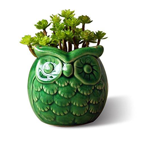GeLive Owl Planter Succulent Planter Flower Pot Container Decorative Vase Garden Cart Window Box Pen Holder (Green) (Pottery Pot compare prices)