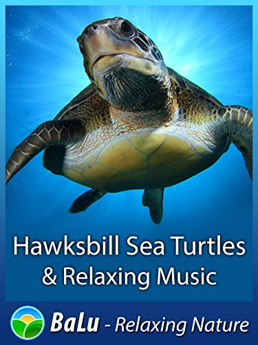 Hawksbill Sea Turtles & Relaxing Music