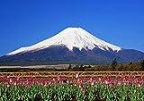 【A3サイズミニポスター】 富士山とチューリップ POSA3-055 (42.0×29.7cm)