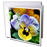 WhiteOaks Photography and Artwork - Pansy Flowers - Macro image of two tones pansies with rain drops in the center - 12 Greeting Cards with envelopes (gc_183565_2)
