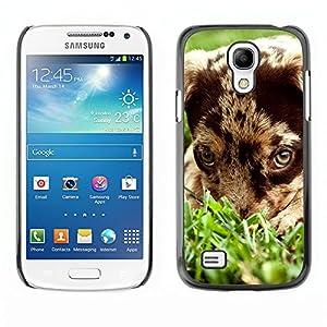 puppy mutt mongrel dog - Samsung Galaxy S4 Mini i9190 MINI VERSION