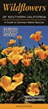 Search : Wildflowers of Southern California: A Guide to Common Native Species (Quick Reference Guides)