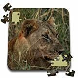 Angelique Cajam Big Cat Safari - Female lion in the grass - 10x10 Inch Puzzle (pzl_26822_2)