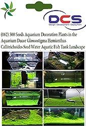 DCS (062) 500 Seeds Aquarium Decoration Plants in the Aquarium Decor Hemianthus Callitrichoides Seed Fish Tank Landscape Foreground Plant