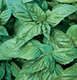 Pelleted Seeds Herb Basil Pesto Italian Large Leaf D944PA (Green) 1000 Open Pollinated Seeds By David's Garden Seeds