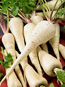 Harris Model Parsnip Seeds - Pastinaca Sativa - 1 Grams - Approx 300 Gardening Seeds - Vegetable Garden Seed