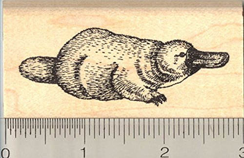 Platypus Rubber Stamp, Duck-billed Semiaquatic Mammal of Eastern Australia and Tasmania