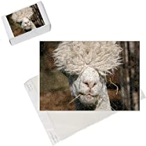 Photo Jigsaw Puzzle of Alpaca at Vauxhall City Farm from PA Photos
