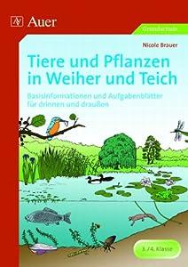 Tiere und pflanzen in weiher und teich basisinformationen for Pflanzen drinnen