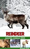 Reindeer - Amazing Animals