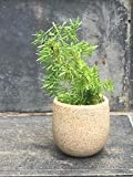 The Garden Store Ceramic stone finish mini planter