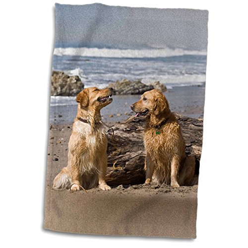 3drose-danita-delimont-dogs-two-golden-retriever-dogs-in-california-us05-zmu0306-zandria-muench-bera
