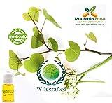 Olivenblatt Olivenbaum - Olea Europaea Mundspray 10ml Zerstäuber Füllen Natürlichen