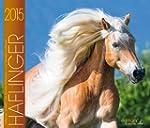 Haflinger Pferde Kalender 2015: Die b...