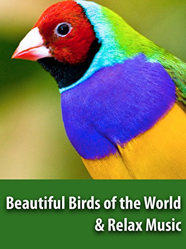 Beautiful Birds of the World & Relax Music - Relaxing Screensaver