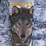 Wolves 2009 Calendar