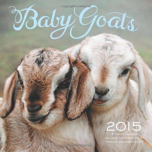 Adorable Baby Animal Calendars Make A Great Gift