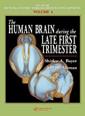 The Human Brain During the Late First Trimester (Atlas of Human Central Nervous System Development)